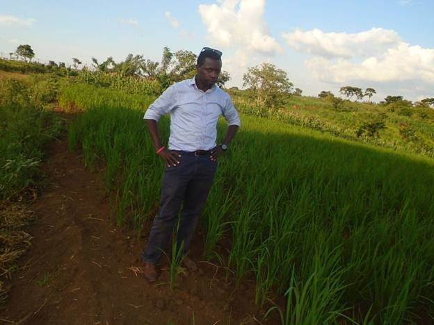 The author in one of the well-tended rice farms in Kyangwali Refuge camp