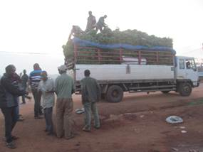 Lorry loaded with matoke heading to Kampala                                                    Matooke arriving in  one of Kampala Markets